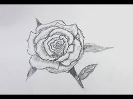 how to sketch a rose for beginners youtube