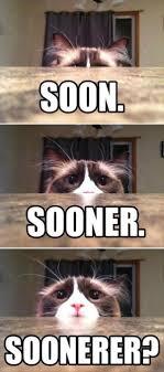 Cat Soon Meme - soon cat humor
