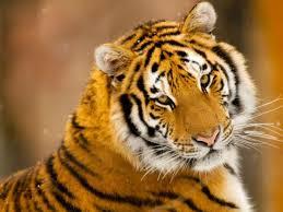 80 best animales salvajes images on pinterest wild animals