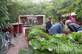How To Make An Urban Garden - how to make an urban vegetable garden city vegetable garden