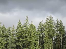 evergreen treetops album on imgur