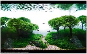 Aquascape Com 34 Best Aquascapes
