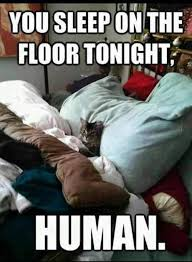 Problem Meme - the problem with bossy cats funny pet humor cute cat meme