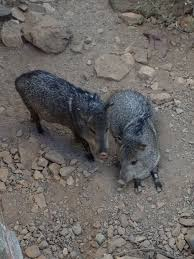 Arizona travel pass images 65 best sonoran desert museum tucson awesome images jpg