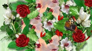 Roses And Butterflies - roses and butterflies flowers nature background wallpapers on