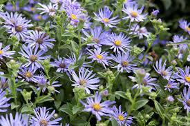 five summer perennials for june gardenersworld com