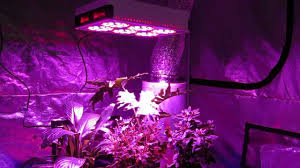 best grow lights on the market top 8 best indoor led grow light review and guideline 2018