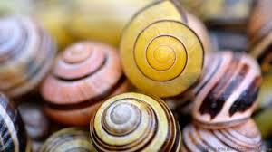 Where Can You Find Snails In Your Backyard Bbc Earth How Do Snails Cope With The Winter Freeze