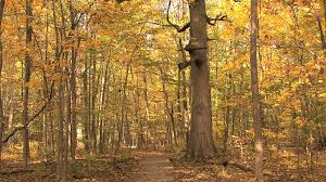 thick tree trunk in autumn woods stock footage videoblocks