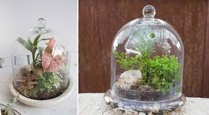 6 terrarium containers perfect for closed terrariums u2013 46 u0026 spruce
