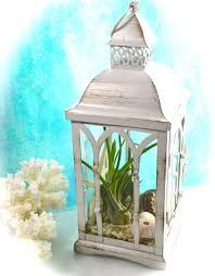 lantern terrarium kit or candle holder beachy nautical decor