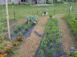 the joys of growing a new vegetable garden u2014 veggie gardening tips