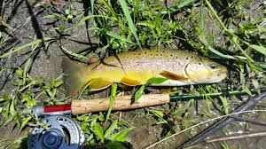 Wisconsin Trout Streams Map by Hay Creek U2013 Twin Cities Trout Unlimited