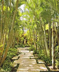 landscaping with palm trees landscape tropical with asian