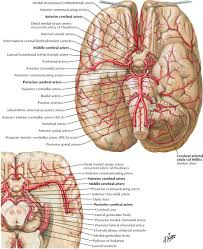netter images google search neurology pinterest google