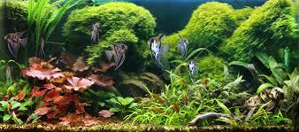 extra large custom freshwater aquariums u0026 fish tanks tri state new