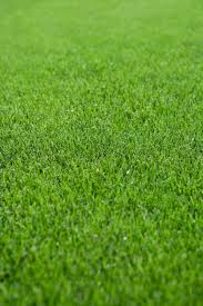 schedule for fertilizing lawns when to feed your grass
