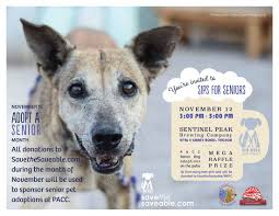 Pet Photo Albums Meet The Saveable No Kill Pima County