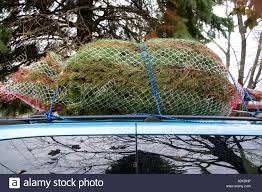 freshly cut christmas tree wrapped in mesh on cartop downers