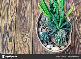 Succulent And Cacti Pictures Gallery Garden Design Cactus Wood Small Garden Miniature Plants Still Life Succulents