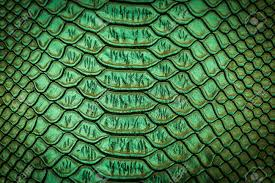 photo collection cool snake skin background