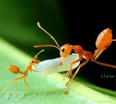best wildlife photography 19