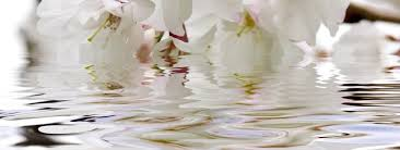 imagenes flores relajantes unidad de bienestar centro de salud y bienestar