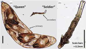 attack of the cloned soldier worms not exactly rocket science
