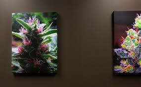 marijuana isn u0027t a medical treatment or moneymaker for missouri