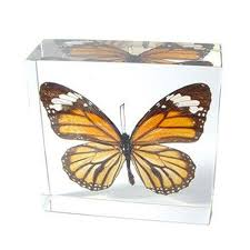 butterfly gifts real framed butterflies for sale amazing quality beautiful