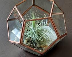 air plant gift etsy