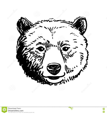 pen and ink sketch of a bear head stock vector image 78278911