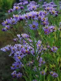 best 25 organic vegetable seeds ideas on pinterest gardening