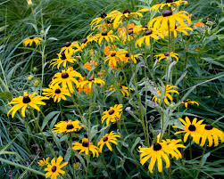 examples of native plants monarch mile connect gateway gardens with naturescape nokomis