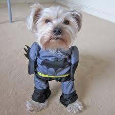 batman dog halloween costumes best costumes for halloween