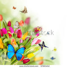 beautiful spring beautiful spring flowers butterflies stock photo royalty free