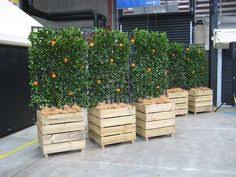 espaliered fruit trees in wooden boxes if these were on wheels