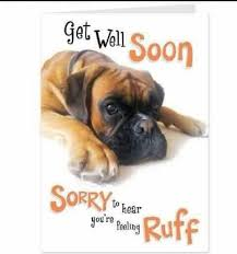 Funny Get Well Meme - ruff ruff get well soon boxers get well cards