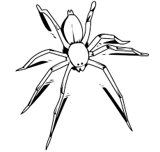 insect coloring pages spider coloringstar
