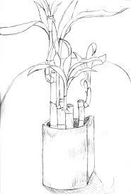 lucky bamboo by shinigami ziggy on deviantart