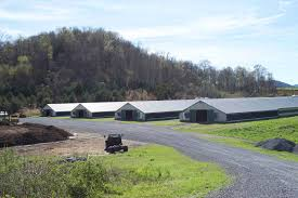 West Tennessee Auction Barn Tennessee Farms And Farmland For Sale United Country Farmland