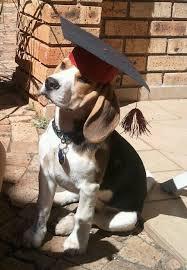dog graduation cap pet graduation caps 4 steps with pictures