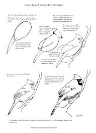a free how to draw worksheet for drawing a cardinal how to draw