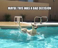 Swimming Pool Meme - bad decision swimming pool meme funny humor dog swimming pool