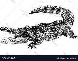 hand sketch crocodile royalty free vector image