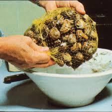 comment cuisiner des escargots comment nettoyer et préparer des escargots