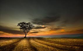 Beautiful Landscape Photos by Beautiful Landscape Image Of Nature Alone Tree On Field