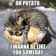 Cute Kitty Memes - your classic kitty meme produced by your favorite nacho material