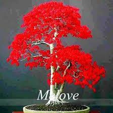 discount japanese bonsai trees 2017 japanese bonsai trees on