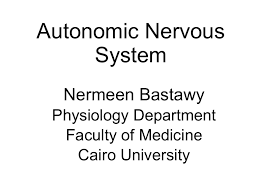 Ans Anatomy And Physiology Physiology Of Autonomic Nervous System